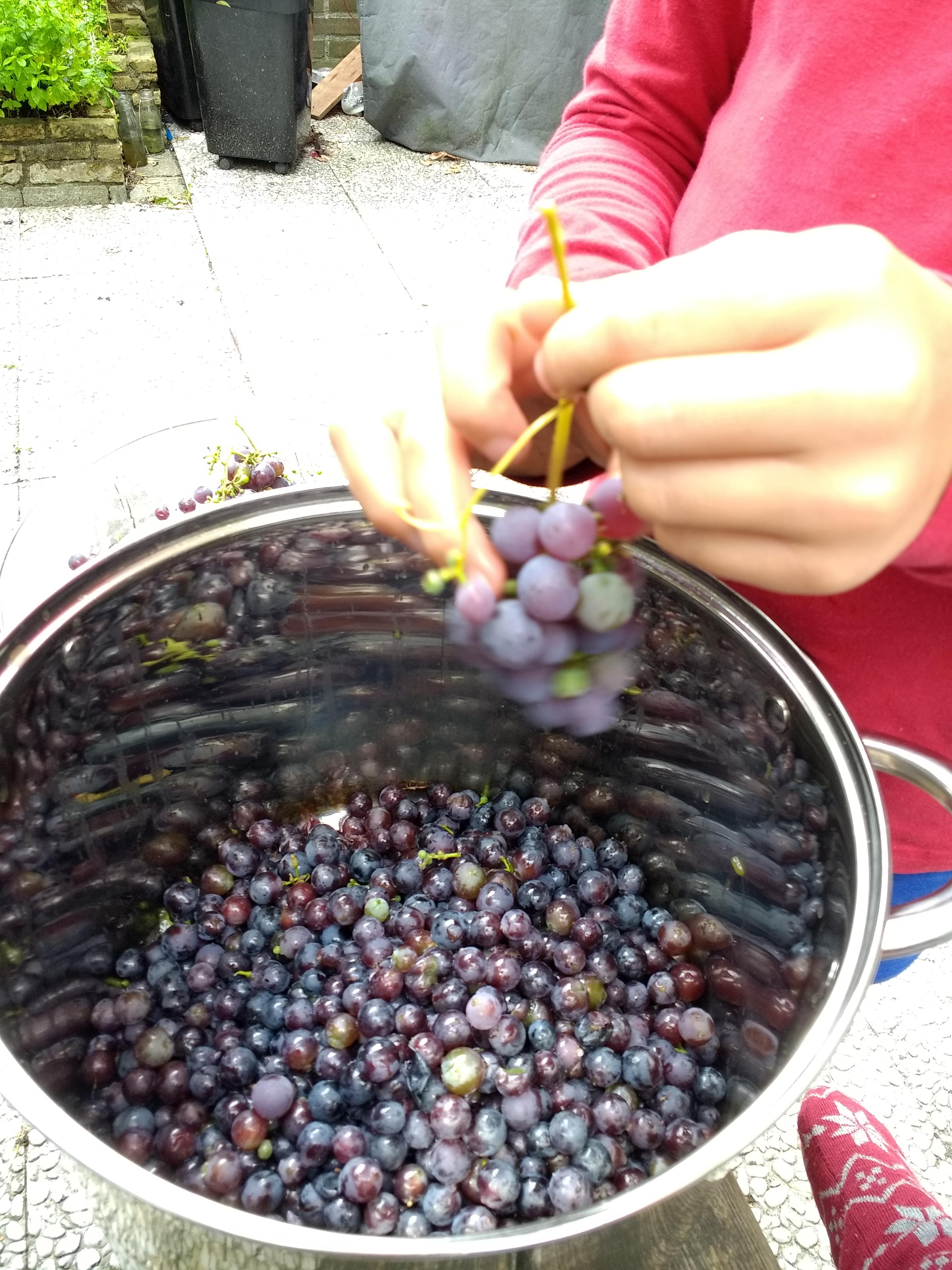druivensap homemade